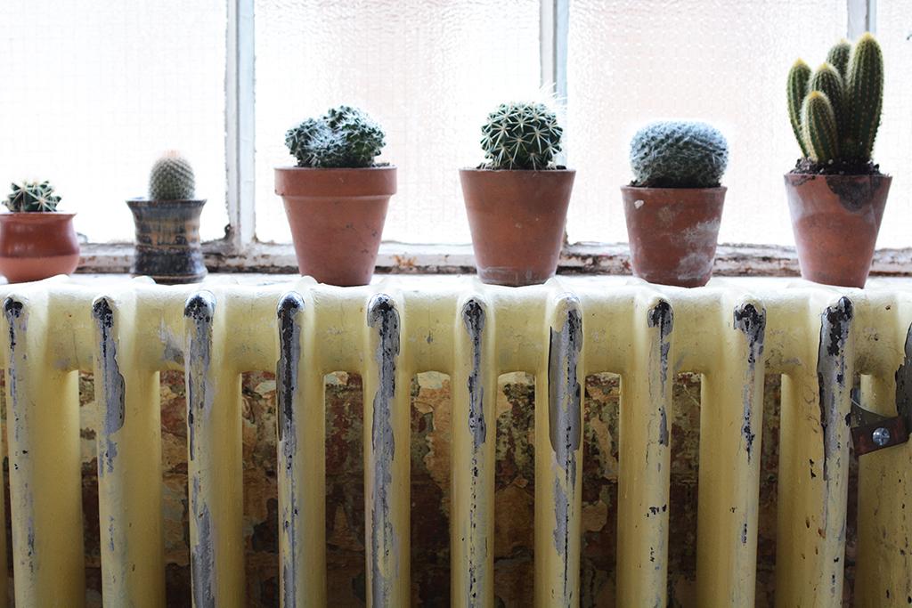 Cacti & Succulents_1