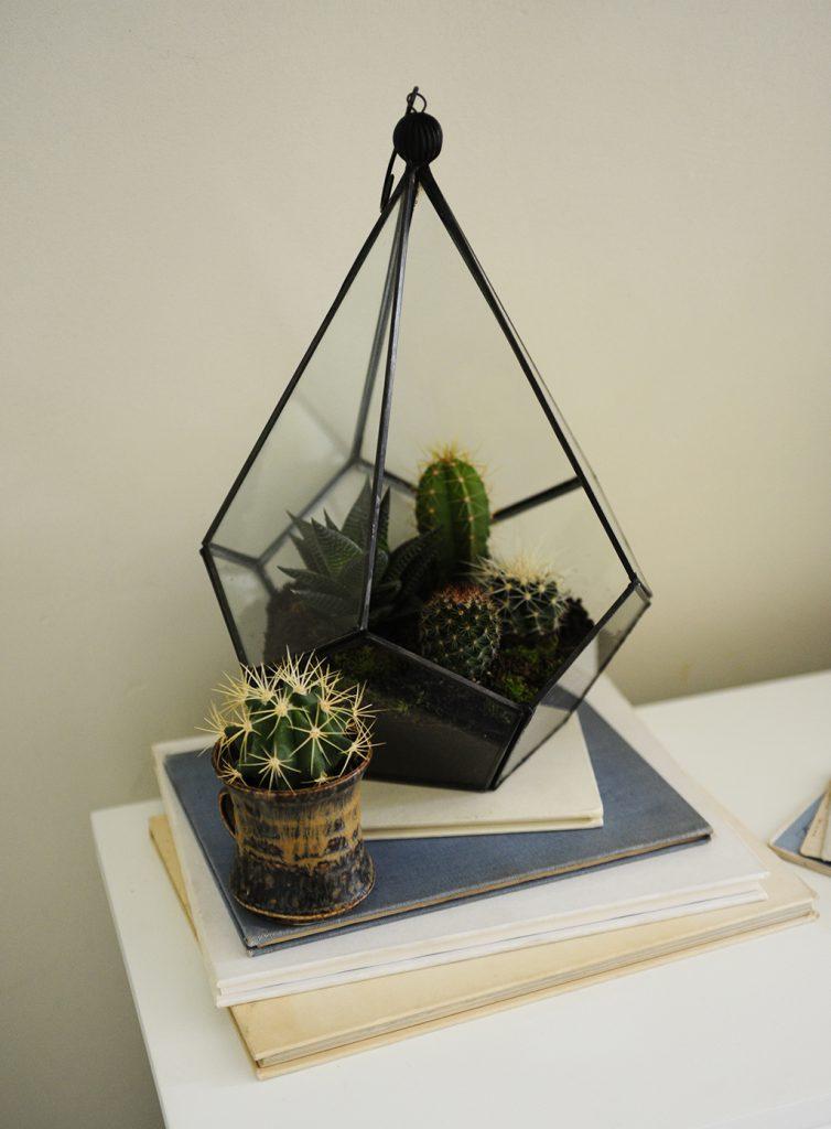Cacti & Succulents_11