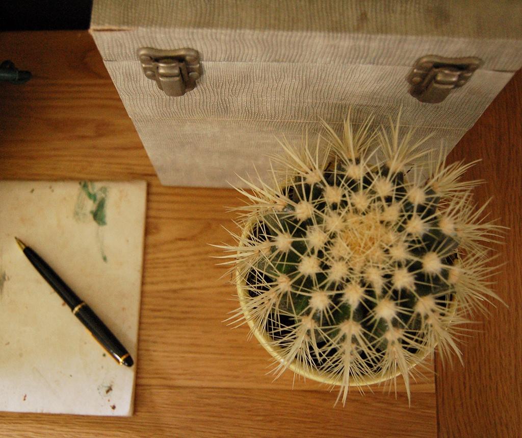 Cacti & Succulents_9