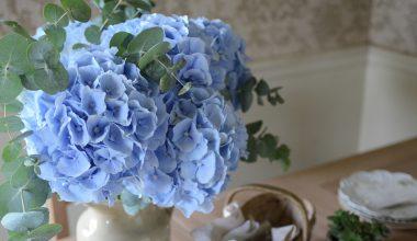 blue hydrangeas, eucalyptus, flowers, table, blooms2