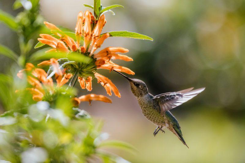 wildlife-friendly-gardens-jason-leung-i0idjjx09ii-unsplash